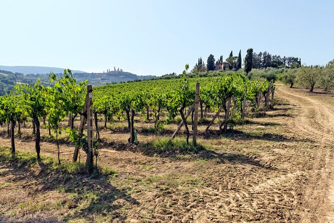Chianti Classico and San Gimignano Private Guided Tour