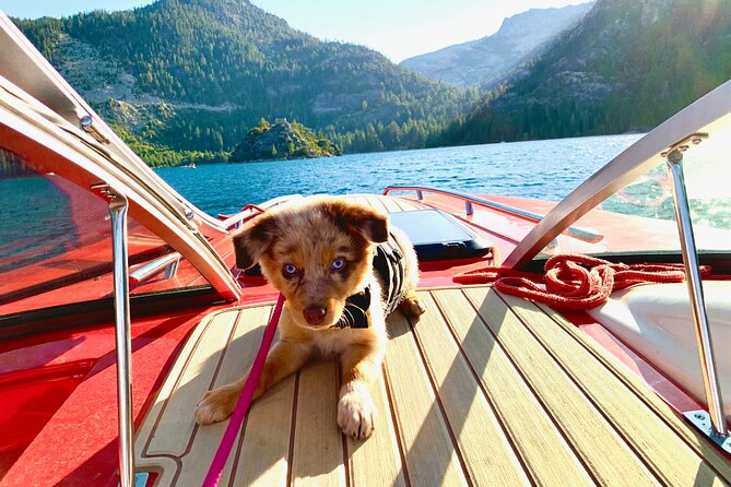 Private Lake Tahoe Boating with Shasta the Puppy