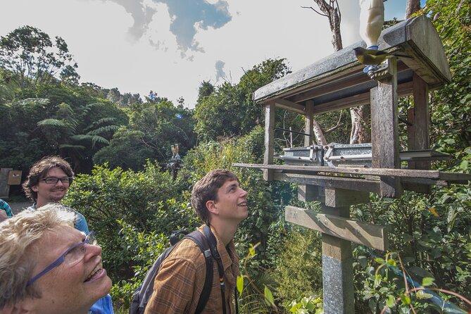 Small Group Daytime 2-Hour Eco Wildlife Tour at Zealandia