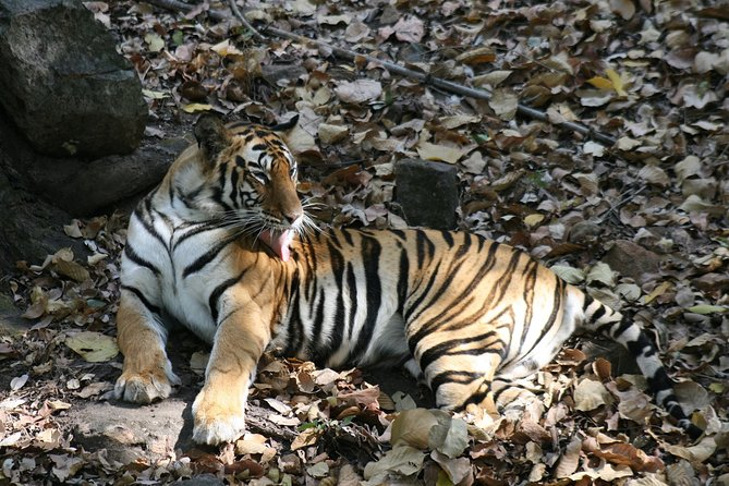 Tiger Photographic Safaris