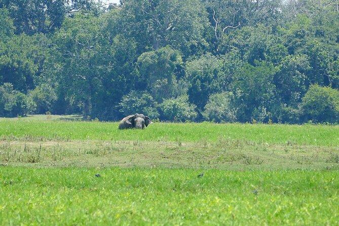 Lahugala Kitulana National Park Safari with Naturalist