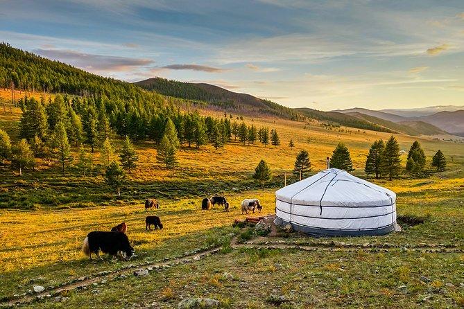Terelj National Park Day Trip from Ulaanbaatar