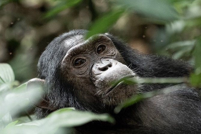 11 Days Classic Wildlife Of Uganda Tour