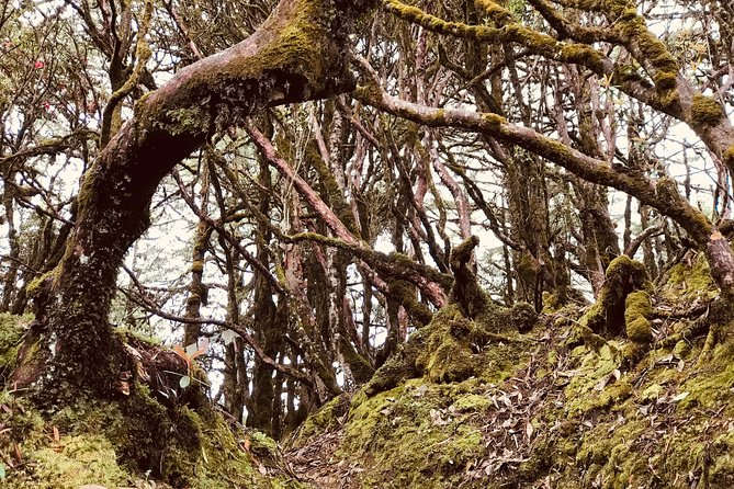 Hiking In Bhutan :Hike Through The Forest of Hemlock & Rhododendrons