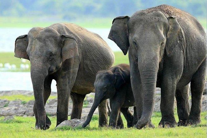 Hurulu Eco Park Safari From Sigiriya