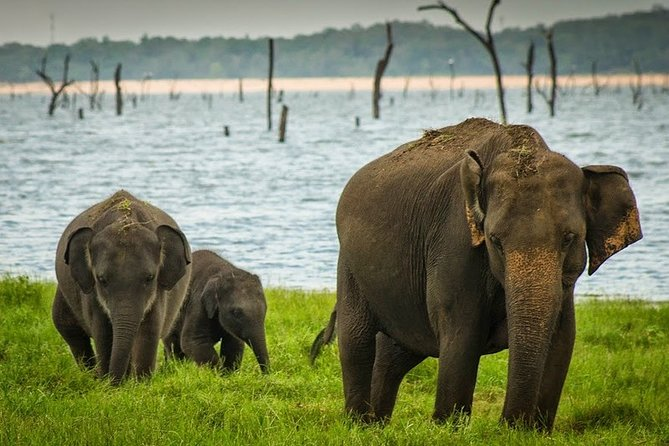 Wildlife safari Minneriya national park : Private tour from Kandy