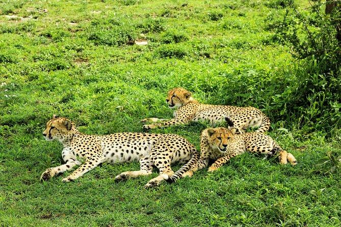 5 Days Tarangire NP, Serengeti NP, and Lake Manyara NP