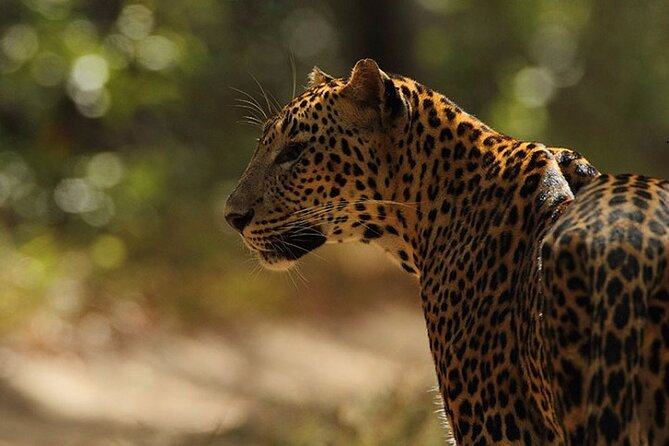 Wilpattu National Park Safari : Private tour