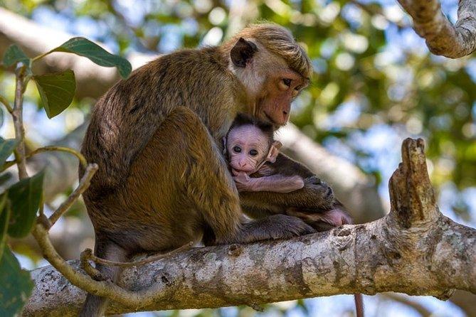 Wilpattu National Park Safari from Kalpitiya : Private Tour