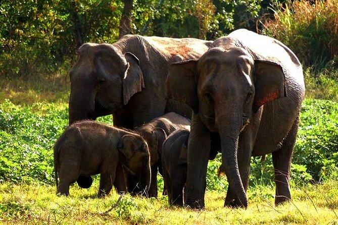 Elephants, Wilpattu National Park
