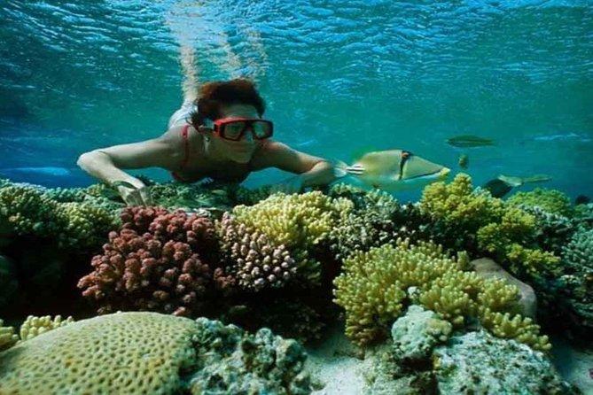 Snorkeling Tour At Port Ghalib from Marsa Alam