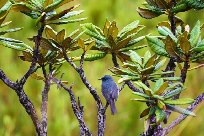 Horton Plains National Park : Private Guided Trekking Tour