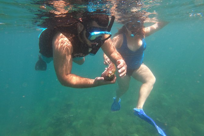 Coral Reef Snorkel Adventure