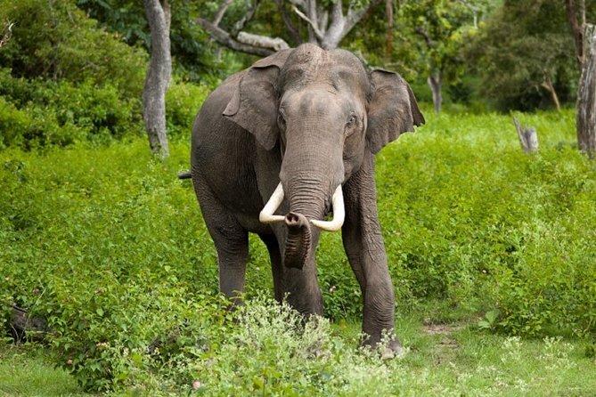 Gal Oya National Park Safari from Pasikudha : Private Tour