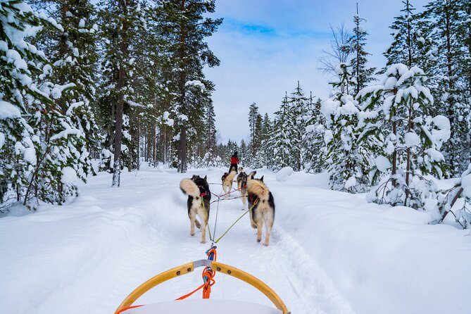 Small-Group Husky Mushing Experience in Rovaniemi