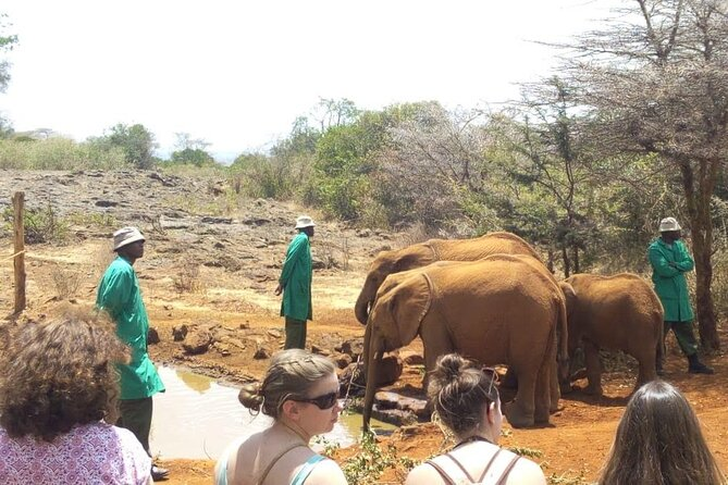 Visit to the Elephant Orphanage (David Sheldrick)