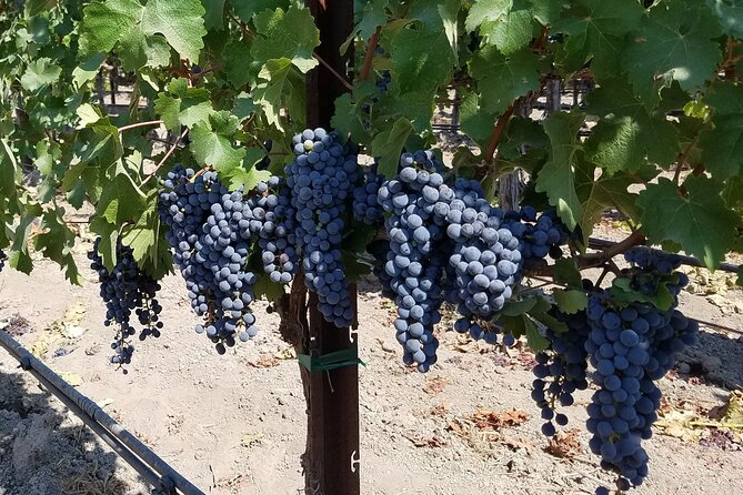6-Hour Wine Country Tour from San Francisco