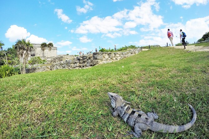 Combo Tour: Tulum, Cenote and 5th Avenue in Playa Del Carmen from Cancun