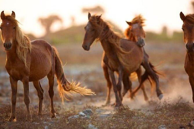 Wild horses, Delft Island Jaffna