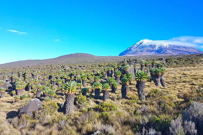 Kilimanjaro Climb via Machame Route- 8 Days