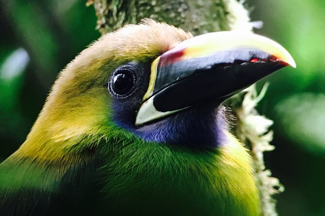 Private Half-Day Birding at Monteverde Cloud Forest
