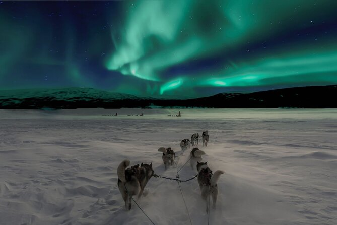 4-Hour Northern Lights Mushing Experience in Rovaniemi