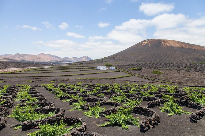 Half day morning tour to Timanfaya Volcano and Camel Ride with Free wine tasting