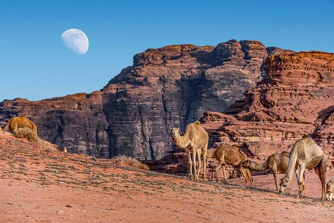 Jordan Pass 3Night Private Lawrence of Arabia:Petra,Wadi Rum from Aqaba / Araba