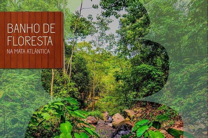 Relaxing Forest Bath Experience in Foz do Iguaçu