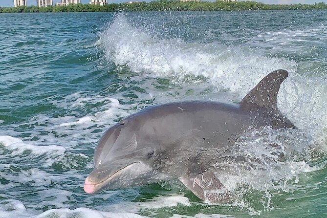 Dolphin Tours - Fort Myers Beach / Estero Bay
