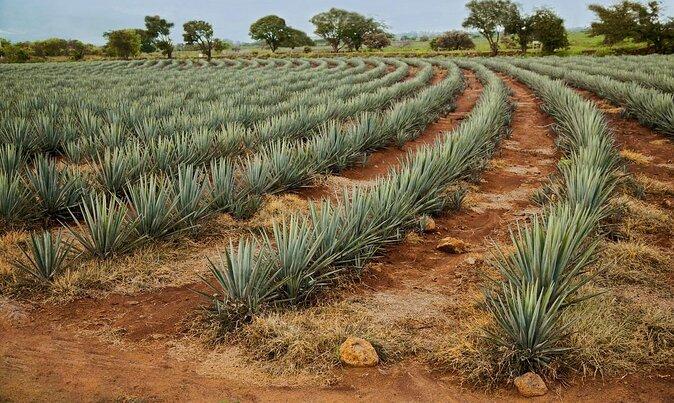 Tequila Tastings in Puerto Vallarta