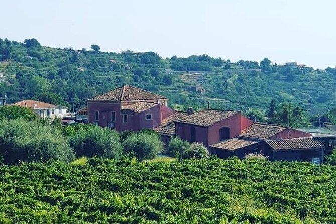 Vigna Patrizia - Wine Experiences Barranca