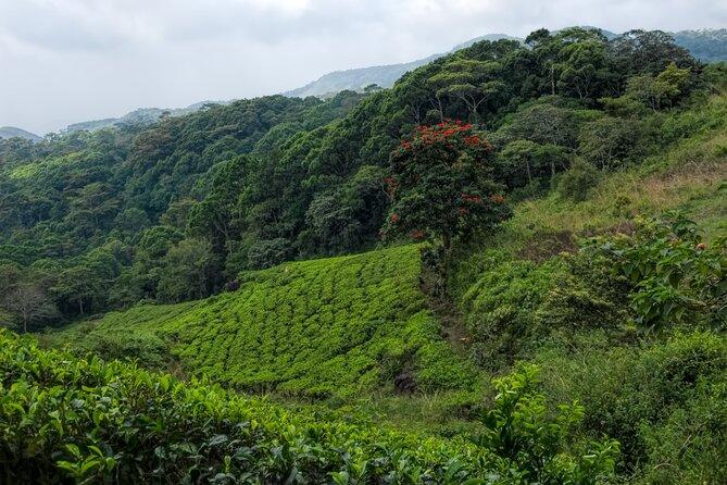 Sinharaja Trekking Day Tour From Galle