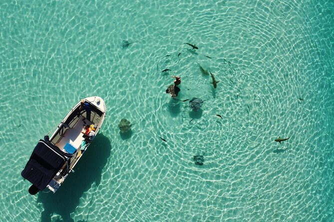 Snorkeling excursion, discovery of the lagoon and its fauna. Intimate vessel.