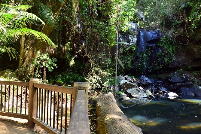 Half-Day Private Tour to Tamborine Mountain with Wine Tasting - Up to 6 people