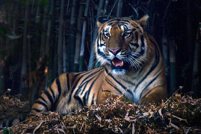 Tiger, Temple & Taj (11 Days)