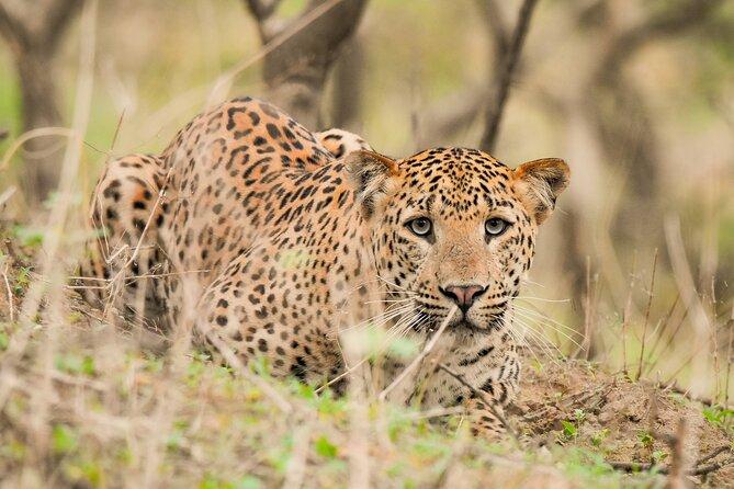 Jhalana Panther Safari Park Private Tour in Jaipur