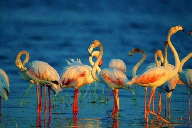 Kumana National park Safari From Arugambay Private Tour