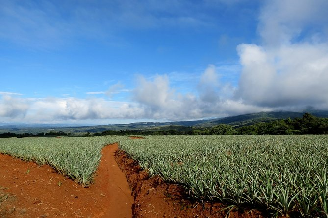 Arenal Pineapple Tour