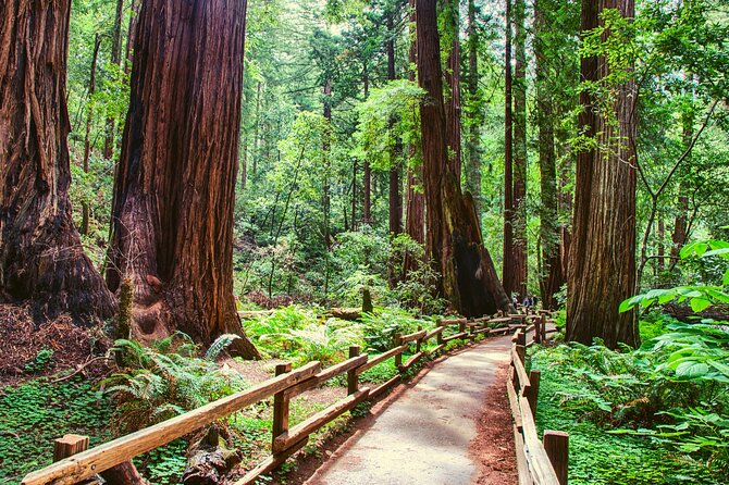 Small Group Muir Woods with Napa & Sonoma Wine Tour