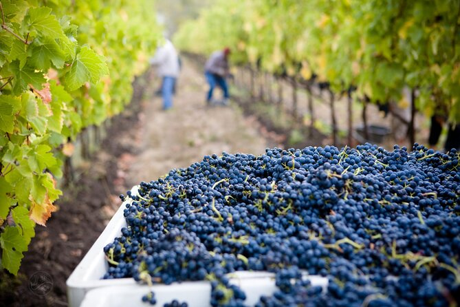 Napa and Sonoma Wine Education + Alcatraz Tour & Aquarium Access