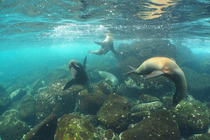 6 Day Galapagos Islands Classic - Group Tour