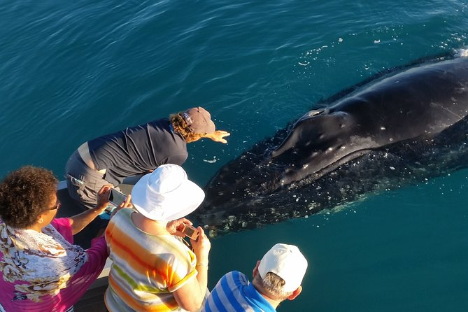 AOC Whale Watching from Broome