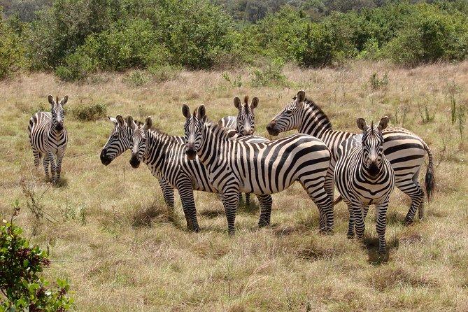 2 Days lake mburo safaris