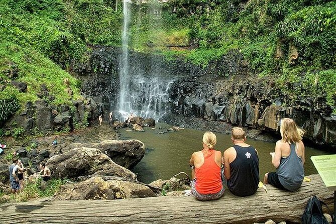 Private Half-Day Springbrook National Park Eco Tour - Up to 6 people