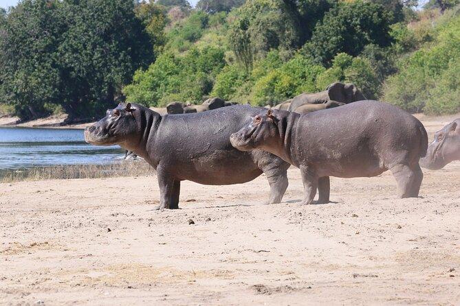 Chobe Day Trip ex Livingstone / Victoria Falls