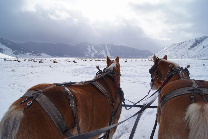Luxury Private Grand Teton Full-Day Tour and Sleigh Ride