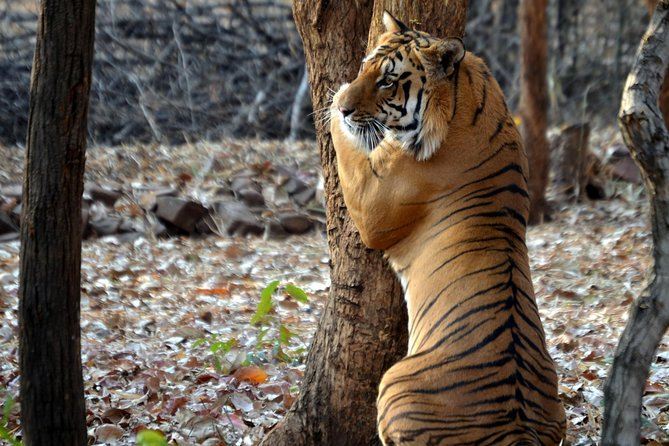 Nagpur to Pench & Satpura National Park, Tiger Safari Tour