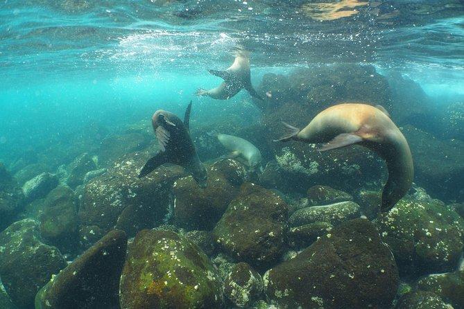 6-Day Galapagos PADI Diving Course