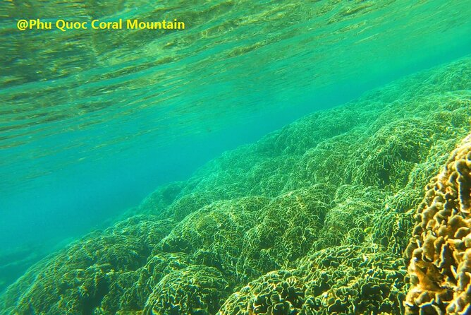 OnBird - PRIVATE Snorkelling at Coral Mountain & U Turn